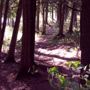 Hike along Eels Creek