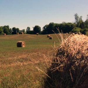 dusty rolls of hay